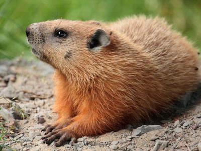 Iowa Caucus, reminds me of Groundhog Day
