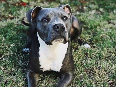 Breed-based dog bans