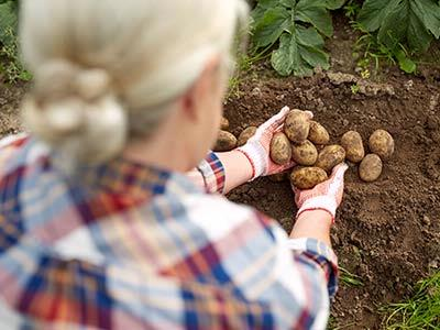 Master Gardeners Offer Free Vegetable Gardening Online Classes